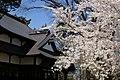 Hirosaki Park - panoramio.jpg