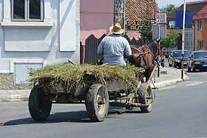 Forage - Horse-drawn transport of fodder in Romania