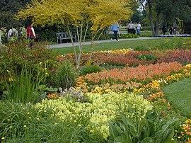 Colorful Flowers. Jungle Garden