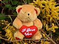I love you (Teddy Bear).JPG