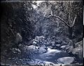Iao Valley, (04), photograph by Brother Bertram.jpg