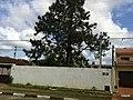Iguape - SP - panoramio (154).jpg