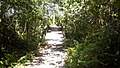 Ilha do mel por Edson Castro 17.jpg