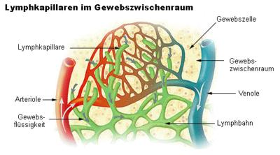 efferent lymphatic vessels