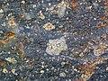 Impact breccia (Sandcherry Member, Onaping Formation, Paleoproterozoic, 1.85 Ga; High Falls roadcut, Sudbury Impact Structure, Ontario, Canada) 25 (46843279255).jpg