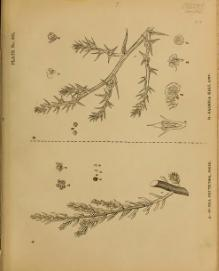 Indian Medicinal Plants (Plates Vol 5).djvu
