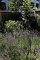 Innenhofgarten im Frühsommer 11.jpg
