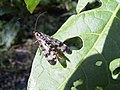 Insekt 04-09-04 14.27.32.JPG