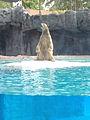 Inuka the Polar Bear.JPG