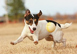 JRT with Ball.jpg