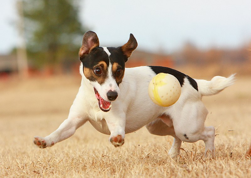 File:JRT with Ball.jpg