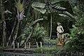Jardim Botânico do Rio de Janeiro - 130716-7093-jikatu (9345331480).jpg