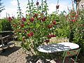 Jardin 2005.jpg