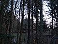 Königstuhl - panoramio (1).jpg