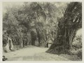 KITLV - 26968 - Kurkdjian - Soerabaja - The Great Post Road by Daendels, presumably at Pasuruan - circa 1900.tif