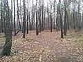 Kamionka, Mikołów, Poland - panoramio (40).jpg