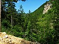 Kanjon Belog Rzava - panoramio (13).jpg