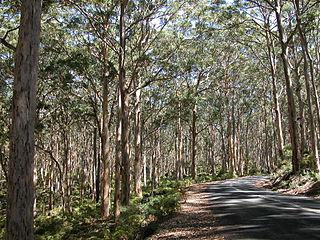Warren (biogeographic region) biogeographic region in southern Western Australia