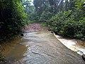 Karura Forest Nairobi.jpg