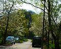 Kirschblüten vor dem Wäldchen - panoramio.jpg