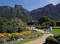 Kirstenbosch National Botanical Gardens - South Africa (2418528060).jpg