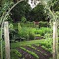 Kitchen garden.jpg