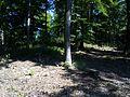 Kostelík (525 m), vrcholová partie (001).jpg