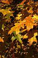 Kralupy nad Vltavou, podzimní listí.jpg