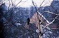 Kronshagen 1985 (10) (20017971879).jpg