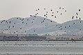 Lake Burrumbeet (24665891542).jpg