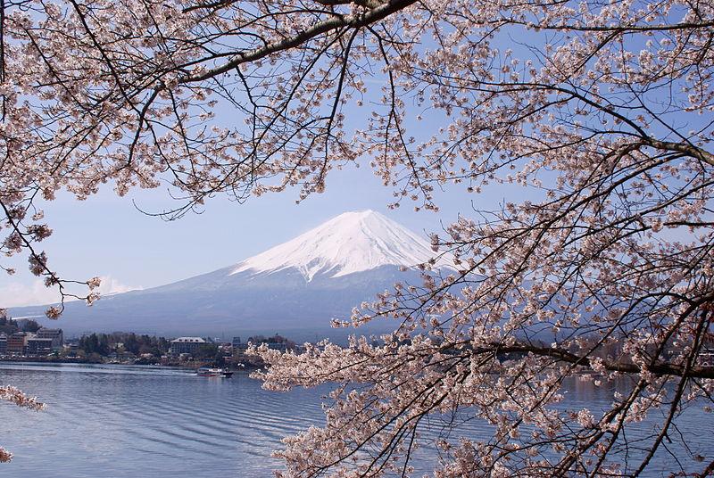 File:Lake Kawaguchiko Sakura Mount Fuji 2.JPG