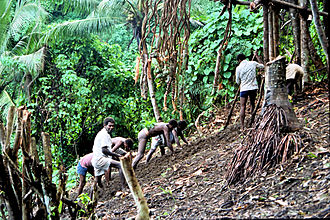 Land diving - Villagers soften the ground to help absorb the impact.