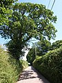 Lane to Chevithorne - geograph.org.uk - 1395948.jpg