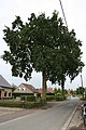 Langevelde 72 welkomstbomen - 255080 - onroerenderfgoed.jpg