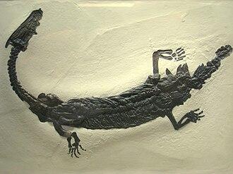 Lariosaurus - Lariosaurus sp., Carnegie Museum of Natural History