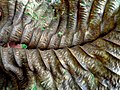 Leaf - Flickr - Stiller Beobachter.jpg