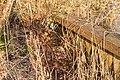 Lekkende houten damwand. Locatie, Natuurterrein De Famberhorst 01.jpg