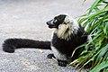 Lemur (36499990613).jpg