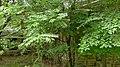 Letchworth-village-womens-dormitory-e-082021-7.jpg