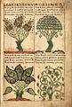 Liber Floridus-Gand-f139-2.jpg