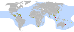 Distribución de D. coriacea[ensin referencies]