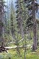 Little Yoho Valley IMG 4888.JPG