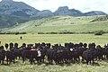 Livestock48.tif (27098060719).jpg