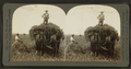 Loading rye in the field, Illinois, U.S.A, by Keystone View Company.png