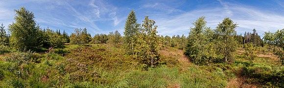 Lothar Path - Black Forest National Park 05.jpg