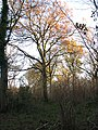 Lower Wood Nature Reserve - a colourful forest canopy - geograph.org.uk - 1614949.jpg