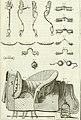 Luz da liberal, e nobre arte da cavallaria - offerecida ao Senhor D. João, principe do Brazil (1790) (14594469069).jpg