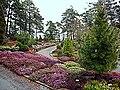 Lynghage Arboretet06.jpg