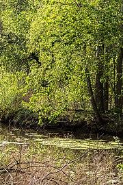 Münster, Wolbeck, Wolbecker Tiergarten, Naturwaldzelle -Teppes Viertel- -- 2014 -- 7098.jpg