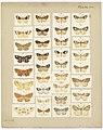 MA I437615 TePapa Plate-XVI-The-butterflies full.jpg